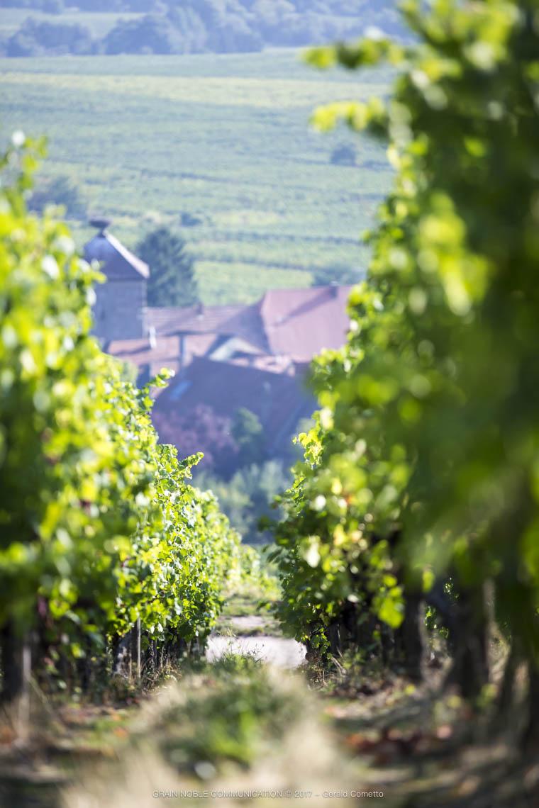 photo d'une rangée de vigne avec des maison en fond