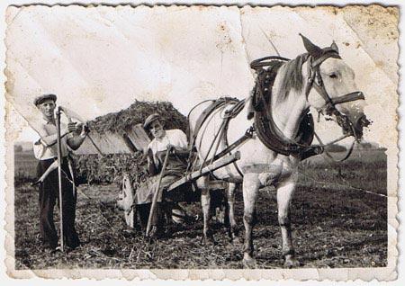 photo d'un cheval avec deux hommes dans les champs