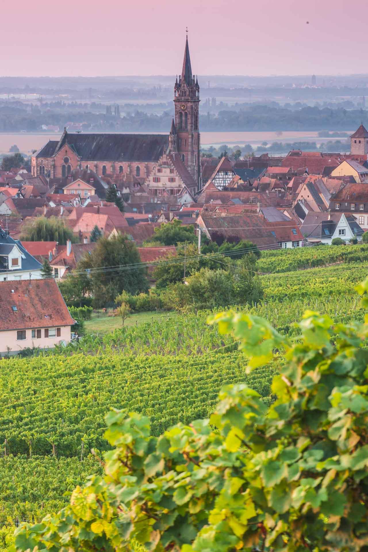 photo de l'élise de Dambach-la-Ville depuis les vignes