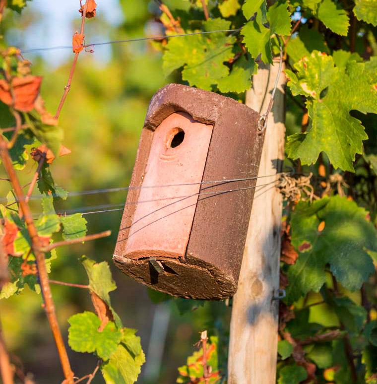 nichoir à mésange dans les vignes