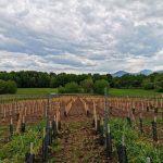 Plantation dans le lieu-dit Blettig